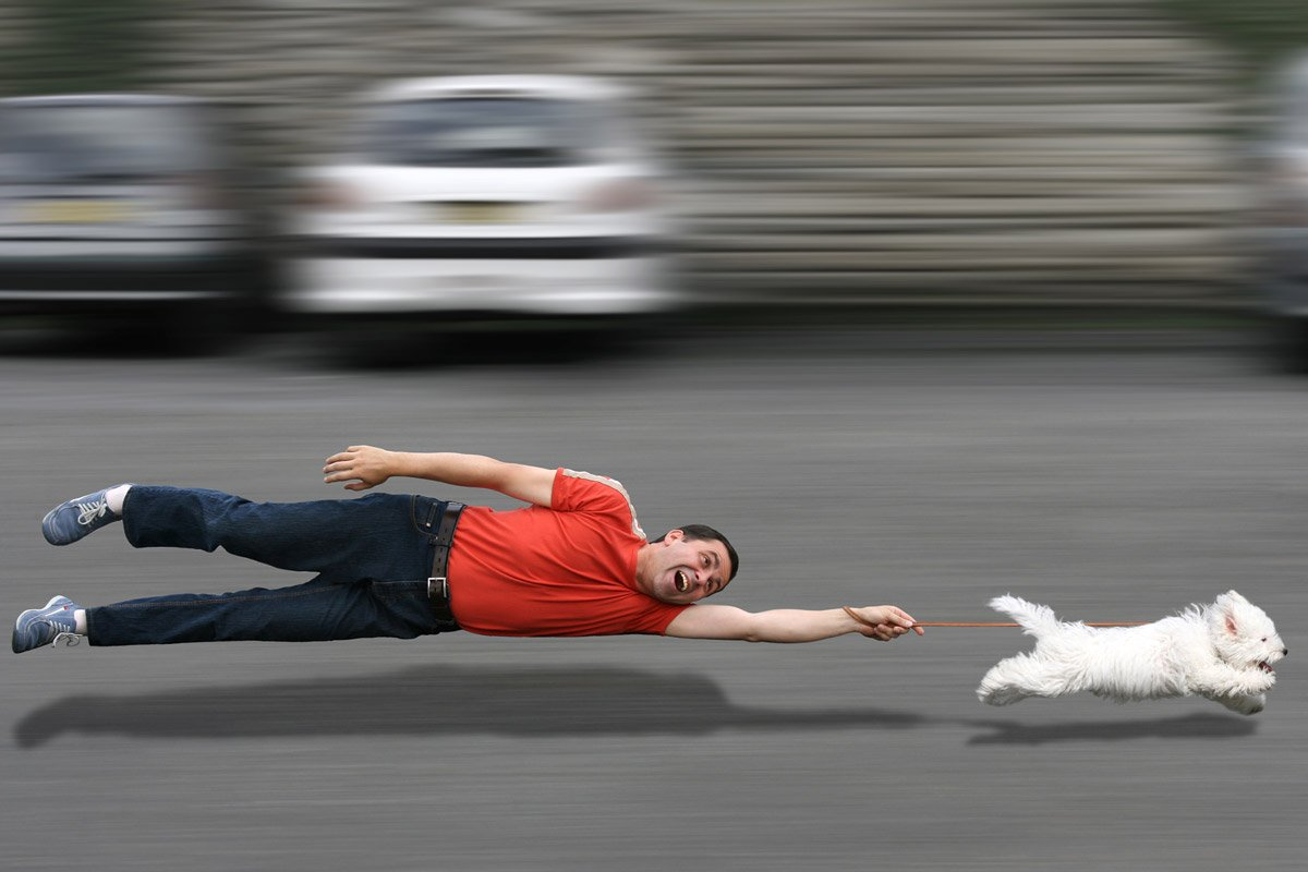 A man is pulled by his small dog.